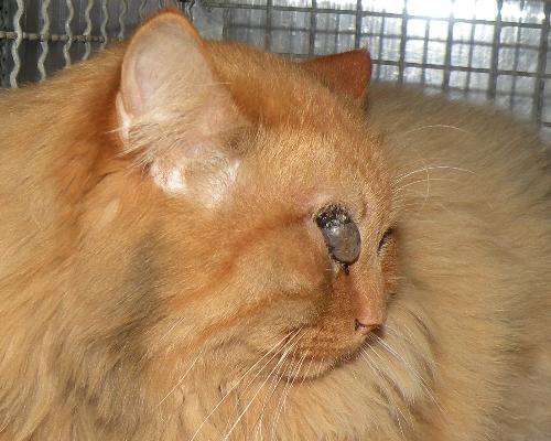 Collari per gatti consigli e avvertenze - Come fare il bagno al gatto ...