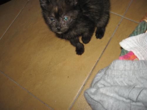 Gattina con occhi lacrimanti gatto for Gatto che starnutisce