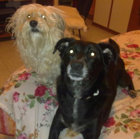 Dolore e blocco urinario sete eccessiva cistite sole sta meglio cane - Cane pipi letto ...
