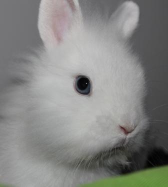 Coniglietto nano problemi di pelo e croste altri animali - Lettiera coniglio nano ...