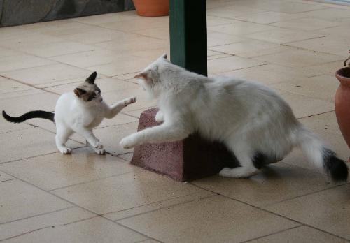 incontro per adulti gatto e gattino annunci libertino con