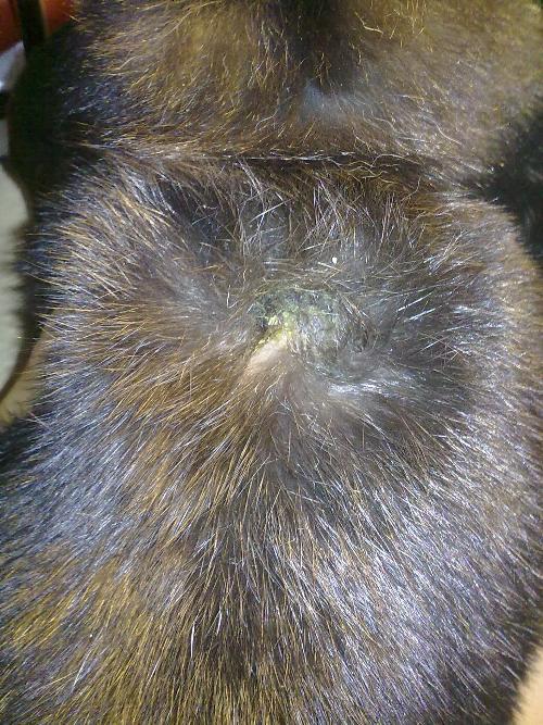 Anatomia di mrt di reparto di petto di una spina dorsale
