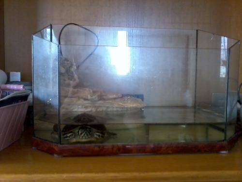Tartaruga d 39 acqua dolce malata non mangia sul ponte for Vasche da interrare per tartarughe