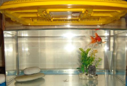 Aiuto per pesciolino rosso a due code altri animali for Filtro vasca pesci rossi