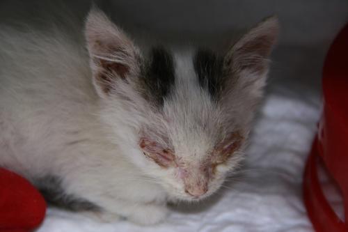 Gatto trovatello in pessime condizioni gatto - Gatto solo in casa per 15 giorni ...