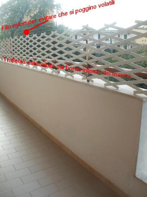 Gattina e balcone il comportamento del gatto for Tutto per il balcone