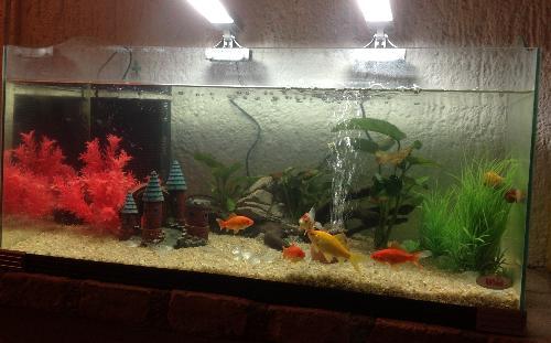 Pesci rossi la chiocciolina forse morta for Acquario di tartarughe