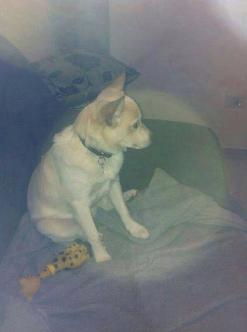 Alla ricerca di un cucciolo di cane di piccola taglia - Portare il cane al canile ...