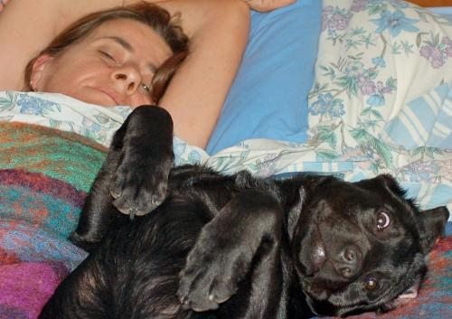 Divano si divano no questo il problema articolo il comportamento del cane - Facciamo saltare i bulloni a questo divano ...