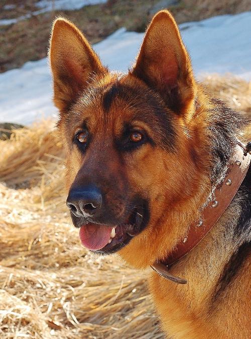 Divano si divano no questo il problema articolo il comportamento del cane - Educare il cane a non salire sul divano ...