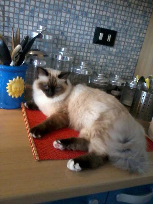 Raffreddore allergia o che cosa gatto for Gatto che starnutisce