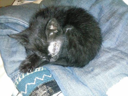 Asportazione occhio x herpesvirus e la degenza gatto for Gatto che starnutisce