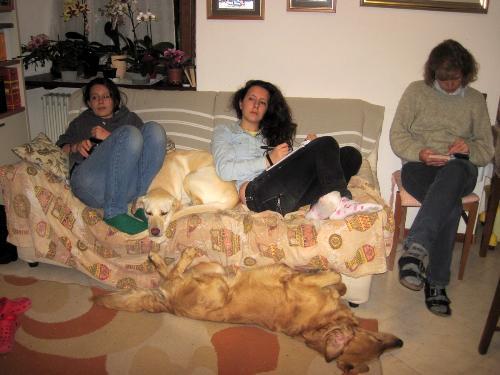 Pip sul divano il comportamento del cane - Cane pipi letto ...