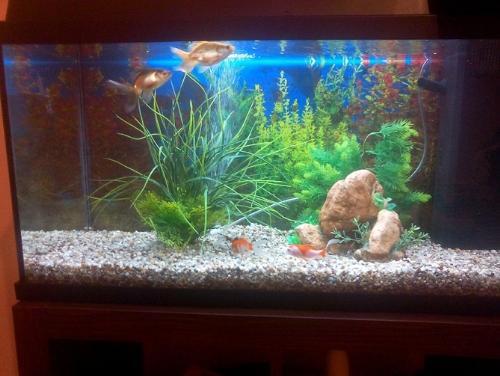 Acquario per pesci rossi nuovo assetto altri animali for Filtro vasca pesci rossi