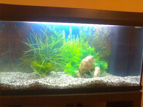 Acquario per pesci rossi nuovo assetto altri animali for Sabbia per acquario pesci rossi