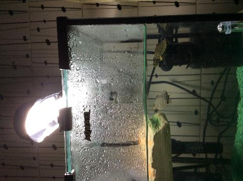 Tartarughe d 39 acqua altri animali for Termoriscaldatore per tartarughe