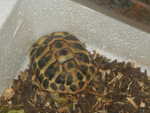 Tartarughina di mio fratello strani movimenti zampe for Terrario per tartarughe acquatiche