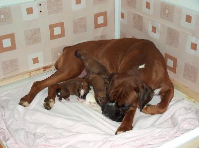 Cassa parto forum for Cassa parto per cani fai da te