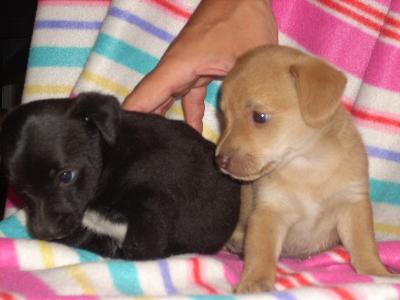 Cani in regalo taglia piccola catania offerte volantino for Offerte in regalo