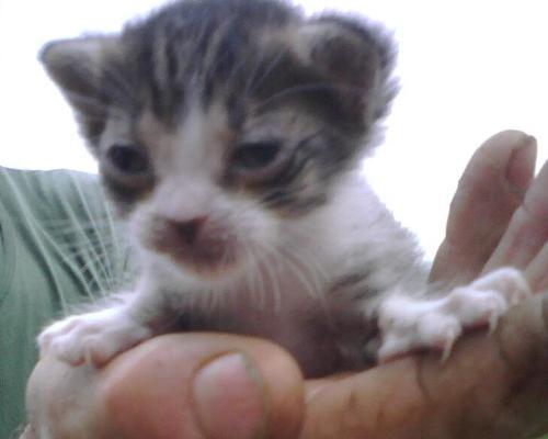 Gattini Di Un Mese Con Occhi Chiusi Gatto