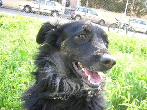 Cagnetta con shunt extraepatici e prevenzione per filaria for Pastiglie filaria cani