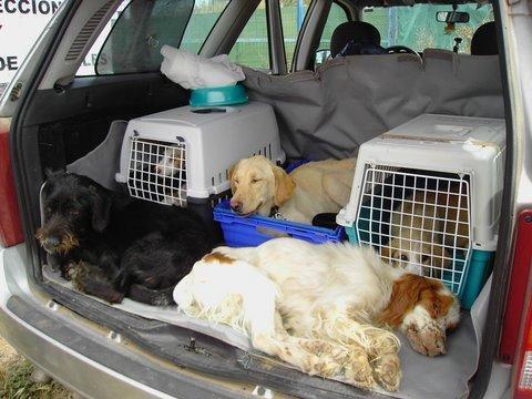 Dramma perreras tutti questi cani stanno per essere for Cani giocherelloni
