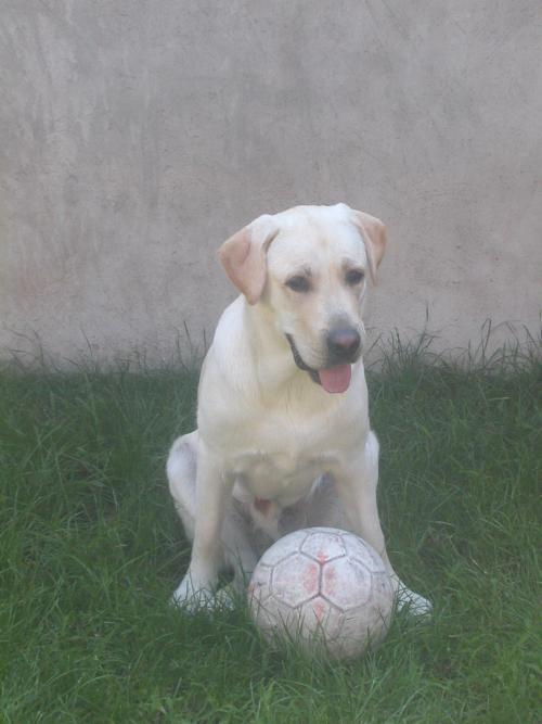 Cercasi dog sitter esperto per ettore zona legnano x met for Cerco dog sitter