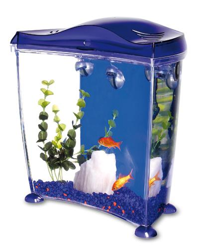 Acquari altri animali for Acquario casa prezzi