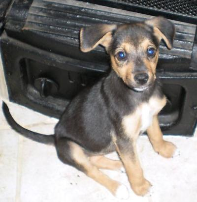 Ebay Annunci Cuccioli Cane In Regalo Film Siani Si Accettano