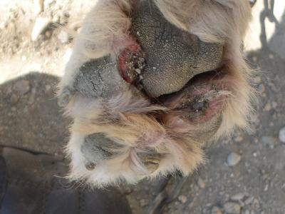 Cuscinetti cane