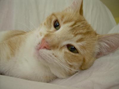 Ulcere sulla lingua gatto for Gatto che starnutisce