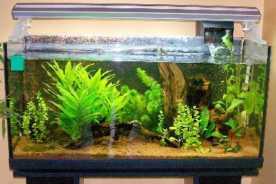 Gli acquari di casa brack nuove foto varie - Acquari di casa ...