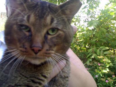 Menelik starnutisce e gli lacrima un okkietto gatto for Gatto che starnutisce