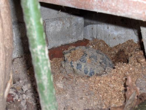 Il risveglio dal letargo altri animali for Letargo tartarughe acqua
