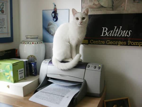 Quando un gatto entra in casa il comportamento del gatto - Piccola palestra in casa ...