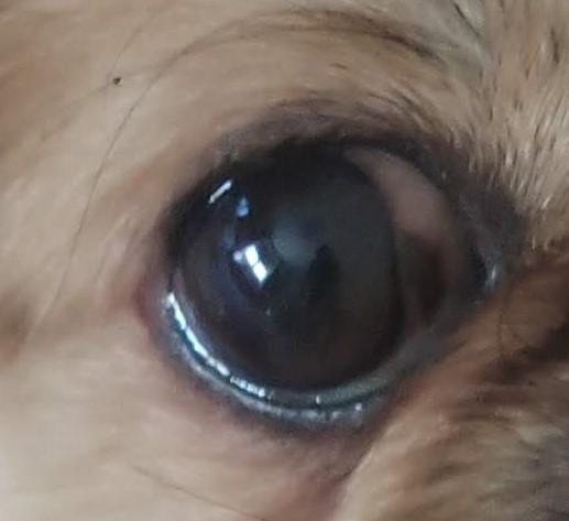 arturo occhio
